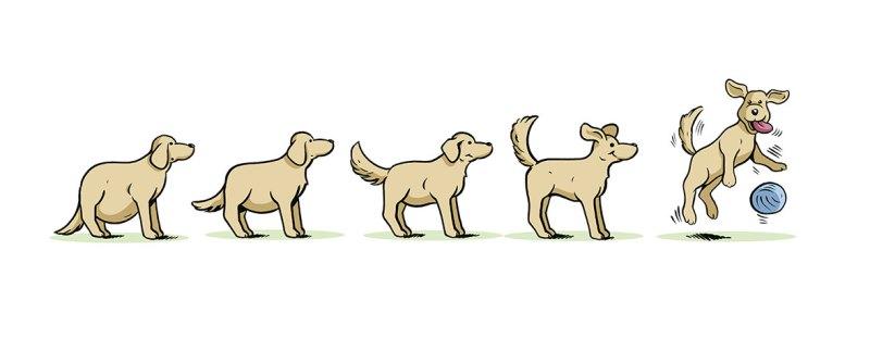 Illustrator-Muenchen-Tiere