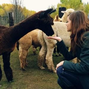 Alpaca Farm| knittedbliss.com