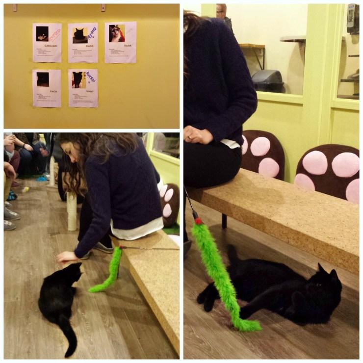 Cat Cafe  knittedbliss.com