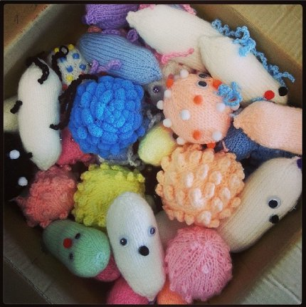 knit microbes