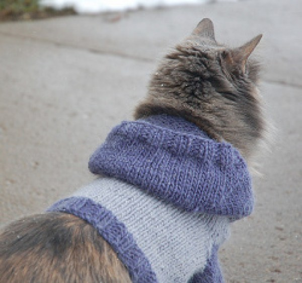 Knitting Patterns For Dog Hoodies : 7 Knitting Patterns For Your Pet   Knitting