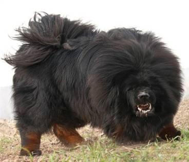 The Grinder - Big Dog
