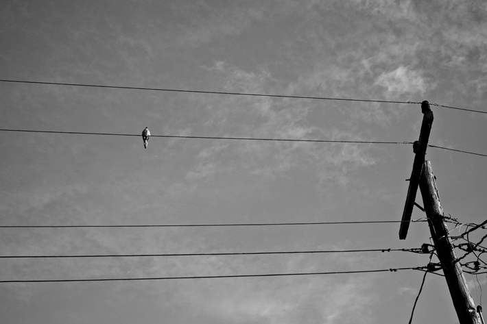 bird on wire bw by Elizabeth McCalley