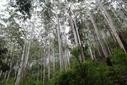 SriLanka_Blog1_029
