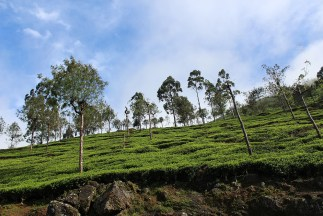 SriLanka_Blog1_036