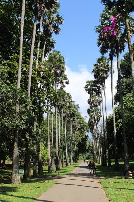 SriLanka_Blog1_041