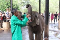 Baby olifant krijgt melk