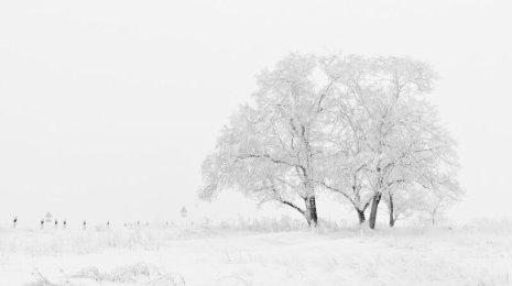 tree-in-snow-in-winter (1)