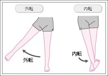 股関節の外転内転イラスト