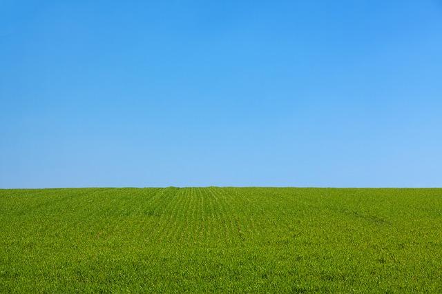 他人の芝生「は」ではなく「も」青いのだ。