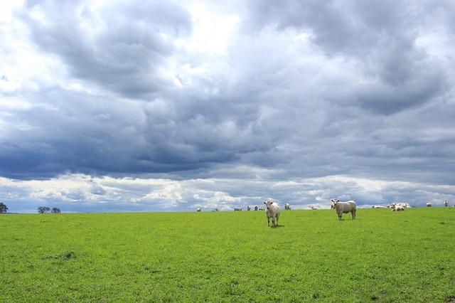 『他人の芝生が青い様に自分の芝生も青い。』
