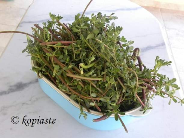 Washed purslane