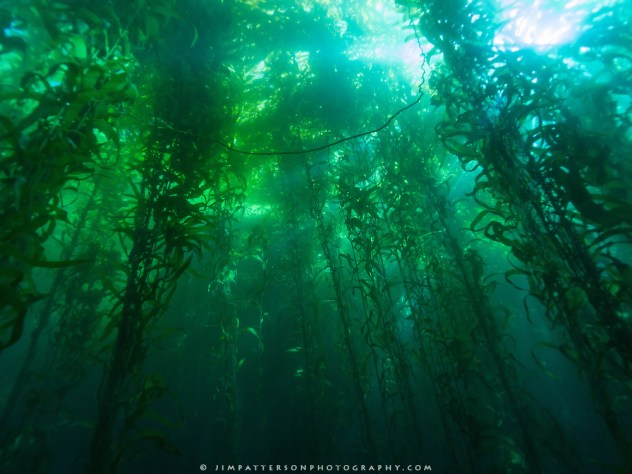 Channel-Islands-Underwater-Kelp-Forest-01-2