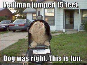 Katze im Postkasten