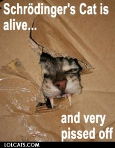Katzen auf lolcats.com