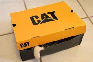 Cat in Cat-Carton