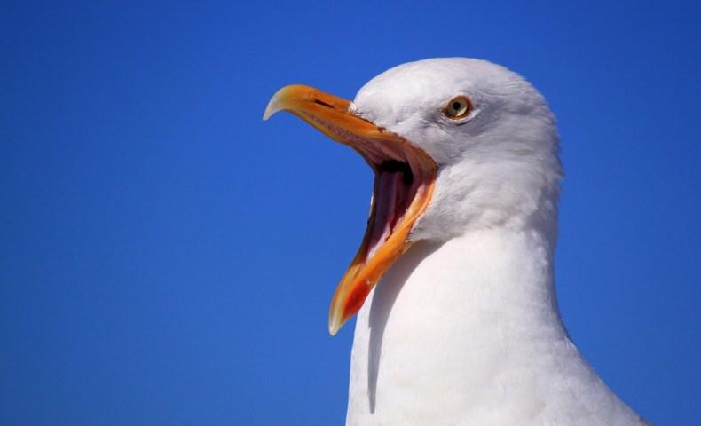 seagull-249638_960_720