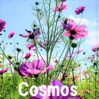 kosumos1
