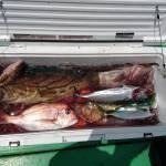 6月24日 船 タイラバ・ジギング・ノマセ釣り