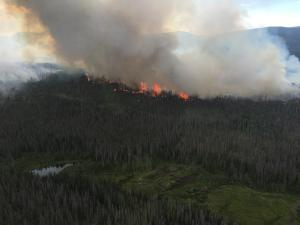 fire in Routt Cational Forest