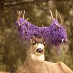 deer-net