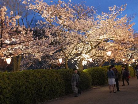 大阪城 桜 ライトアップ