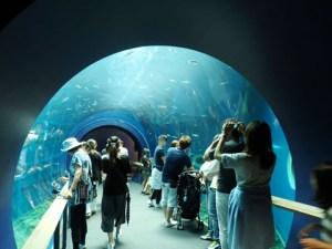 琵琶湖博物館 水族展示室