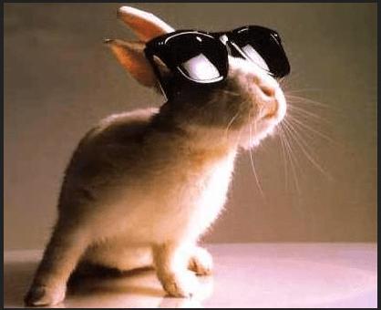 rabbit glasses
