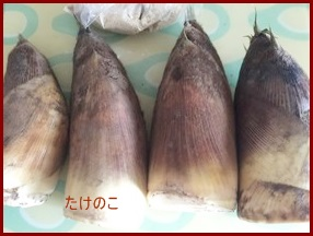 takenoko0413-1