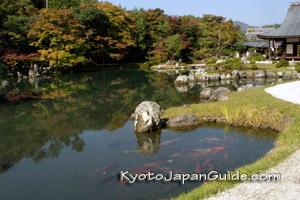 Koi in pond at Tenryu-ji