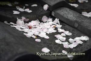 Sakura petals on roof tiles