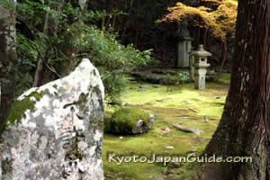 Moss in garden at Kozan-ji