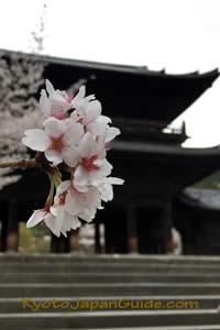 Cherry blossoms Nanzen-ji Sanmon 038