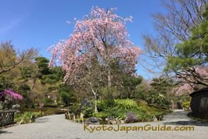 Garden at Tenryu-ji 061