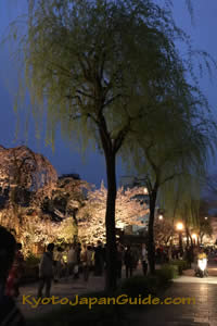 Gion sakura at night 013