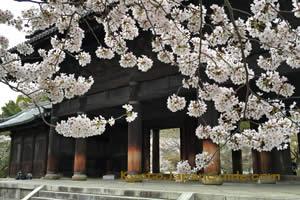 Nanzen-ji Sanmon Gate sakura 033