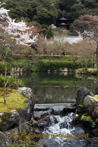 Pagoda pond and sakura at Eikan-do Temple 041