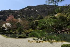 Pond at Tenryu-ji Temple 081