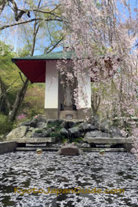 Sakura petals on pool Tenryu-ji Temple garden 075