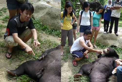 Deer Park at Pahang
