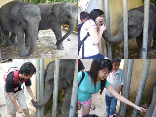 Elephant sanctuary at Pahang