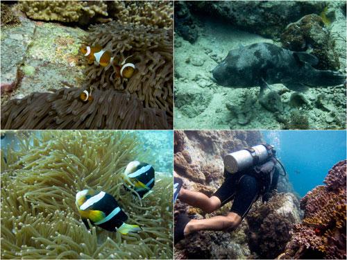 nemo and friends, puffer fish