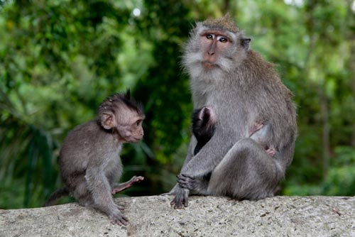 mom, elder sibling, and baby monkeys