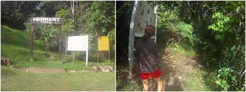 jungle trekking is a great exercise!