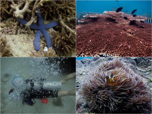 starfish, coral, clown fish