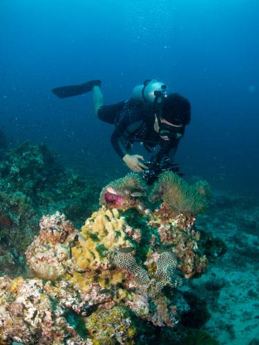underwater photographer at work