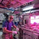宇宙で野菜の栽培成功!プロジェクト「VEGGIE」
