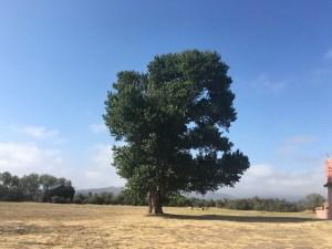 Exploring Lompoc, CA