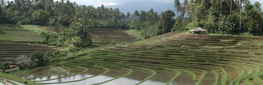 Bali-Isa