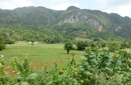 Paysage de Viñales: au premier plan, le tabac, puis la terre rouge et au fond les mogotes calcaires
